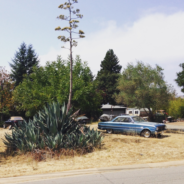 Yes...that is essentially a prehistoric succulent, next to a stunning classic car. This whole routine exists about 4 houses down from ours.